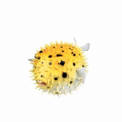 Porcupine Fish Squirts  |  Play Visions, Club Earth & Cascade Toys